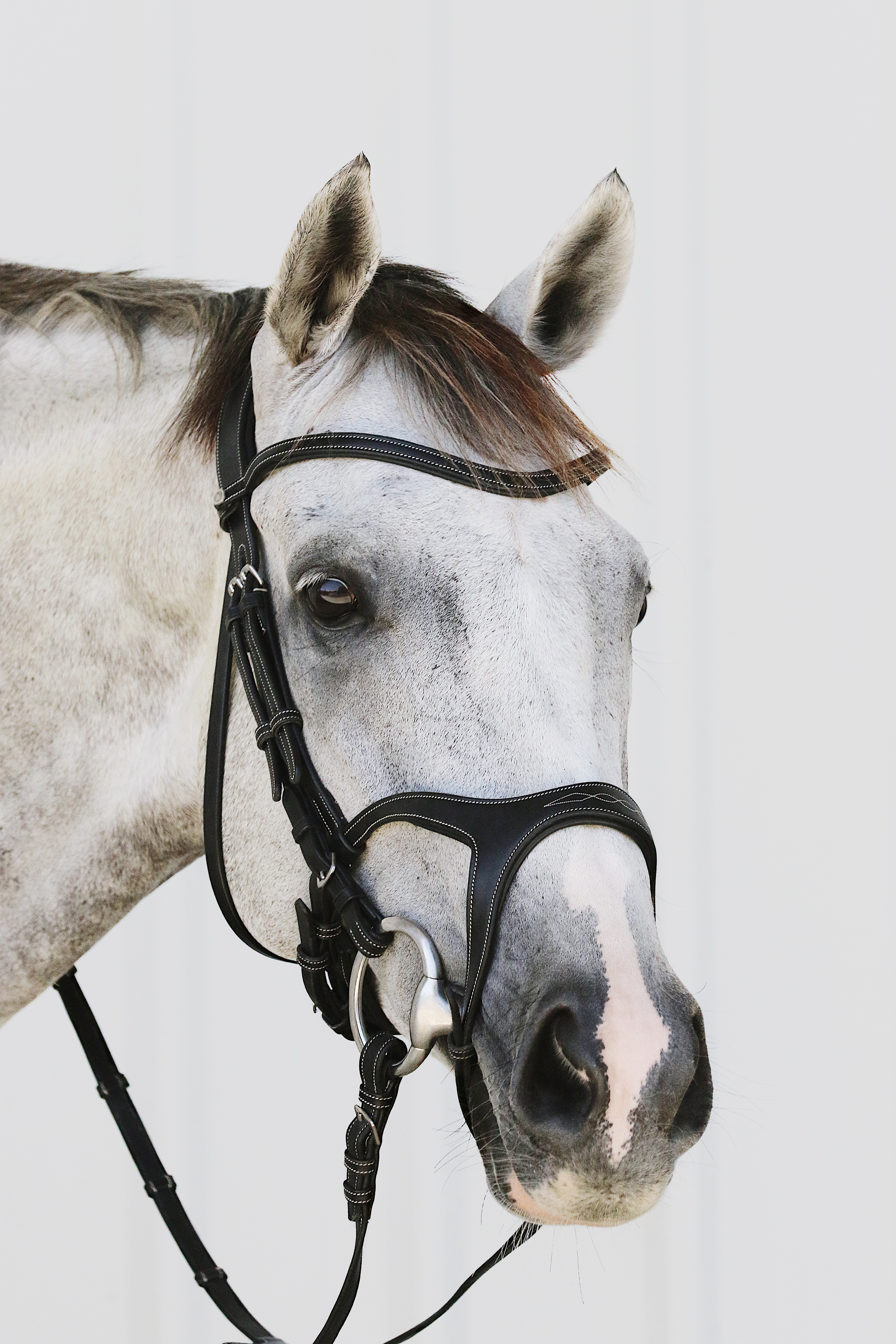 61001-Monarch-bridle-x4.jpg